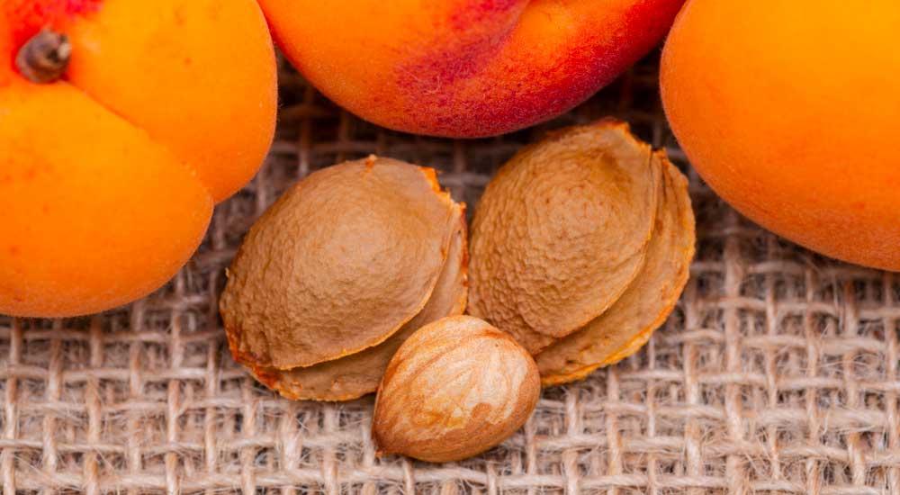 amandes de noyau d'abricot